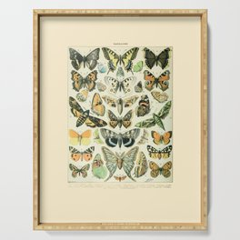 Vintage Butterfly Diagram // Papillions by Adolphe Millot 19th Century Science Textbook Artwork Serving Tray