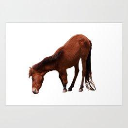 Three legged horse Art Print