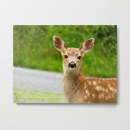 Eye Contact With Fawn Metal Print