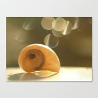 seashell Canvas Prints featuring Seashell... by Nature In Art...