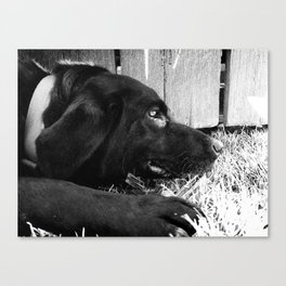 Molly Canvas Print