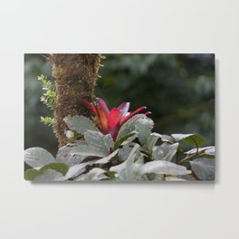 Wild Orchid Flower in Costa Rica Metal Print