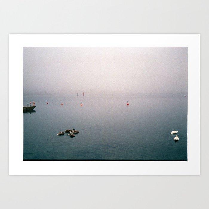 Swan family in misty harbour Art Print