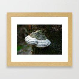 Fungi - Lichen  II Framed Art Print