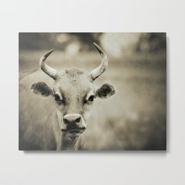 COW - Old Friends Collection Metal Print