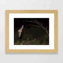 Microbat Framed Art Print