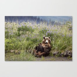 Momma Bear Nursing in the Lupines Canvas Print