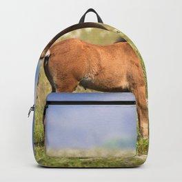 Watercolor Horse 38, Icelandic Pony, Höfn, Iceland, Baby Steps Backpack