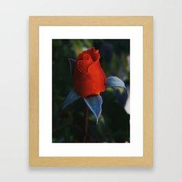 Buddy Rose Framed Art Print