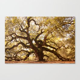 Angel Oak 5 Canvas Print