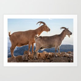 Two goats full portrait 7639 Art Print