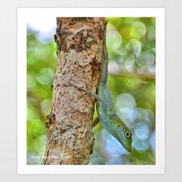 Small Cayman Lizard Art Print