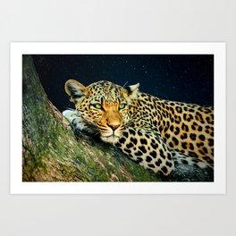 Leopards Gaze 3 Art Print