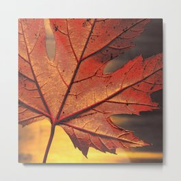 maple leaf - square -brown Metal Print