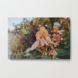 Garden Gladiolus Metal Print