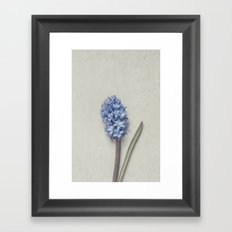 One Light Blue Hyacinth Framed Art Print