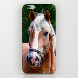 Equine Beauty iPhone Skin