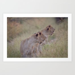 Four Lions in a row Art Print