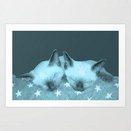 Siamese kittens Art Print
