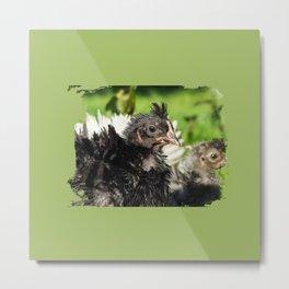 cute chick, chicken Strupp Metal Print