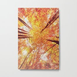 Forest during Fall Metal Print