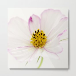 Sensation Cosmos White Bloom Metal Print