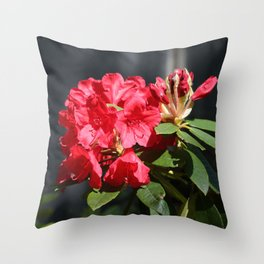 Ruby Red Rhododendron Throw Pillow