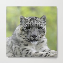 Leopard 010 Metal Print