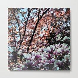 magnolia summer Metal Print