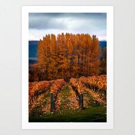 Queenstown Vineyard - New Zealand Art Print