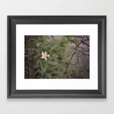 Small Honeybee Framed Art Print