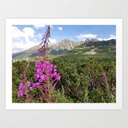 Carpathian Tatry Mountain and Flower Summer Landscape Photo Art Print