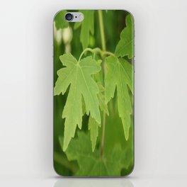 Amber Orientalis Leaves iPhone Skin