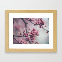 Pink Cherry Blossom On Branch Framed Art Print