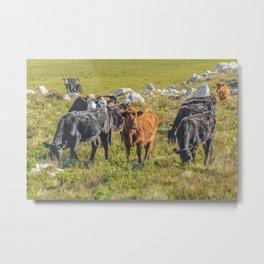 Cows at Countryside, Maldonado, Uruguay Metal Print