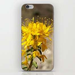 In the Painted Hills iPhone Skin
