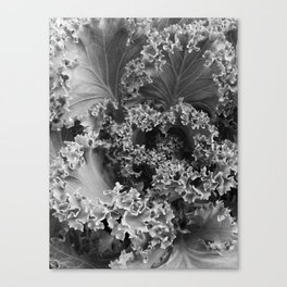 Lettuce Be Canvas Print