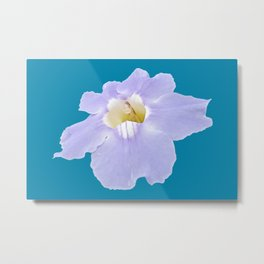Blue skyflower Metal Print
