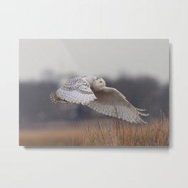 snowy owl in flight Metal Print