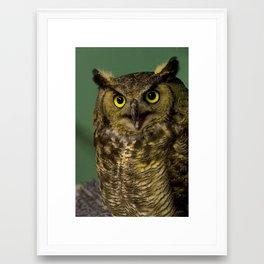 Green Horned Owl Framed Art Print