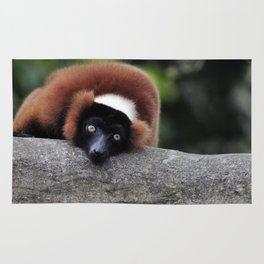 Red Ruffed Lemur Rug