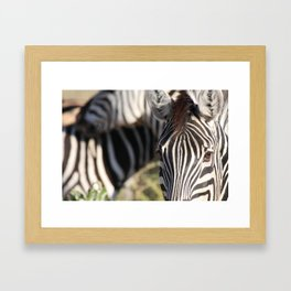 Savuti Equines Framed Art Print