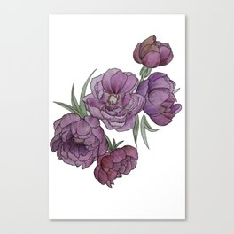 Peonies in Pink and Ink Canvas Print