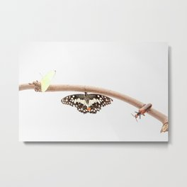 beetle and butterfly Metal Print