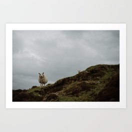 Two Sheep. Art Print