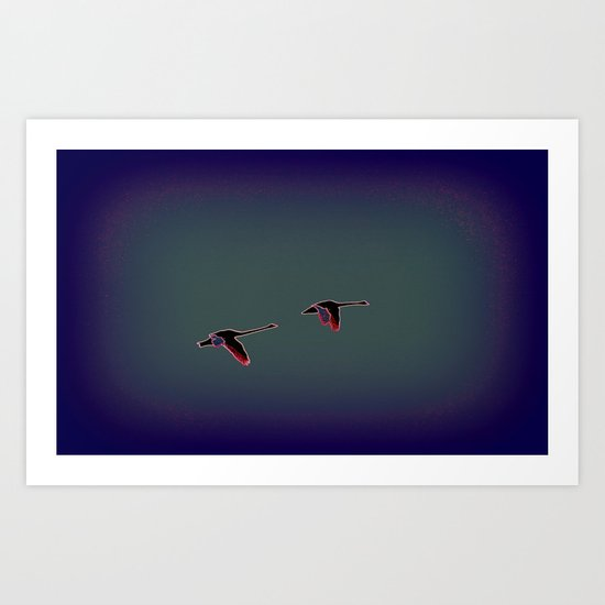 Long Neck Magpie Geese (Anseranas semipadmaia) Art Print