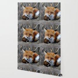 Little fox Wallpaper