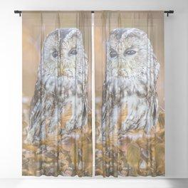 Tawny Owl in woodland Sheer Curtain