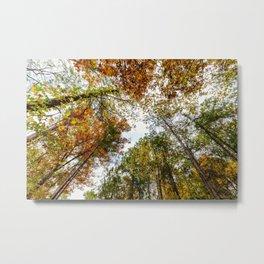 Fall Tree Tops Metal Print