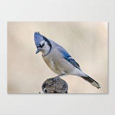 Blue Jay # 3 Canvas Print